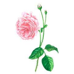 Balancing Rose Mist 8